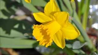 Cape May New Jersey , Spring Flower Bloom Pictorial