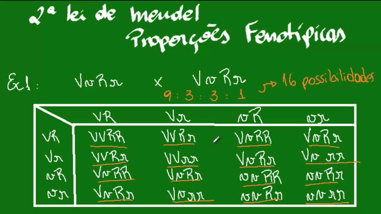 2ª Lei De Mendel Proporcoes Fenotipicas Youtube