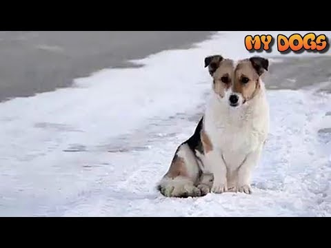 Rescue a Loyal Dog That Waited SIX MONTHS For His Owner in -30C After He Was Abandoned at Bus Stop