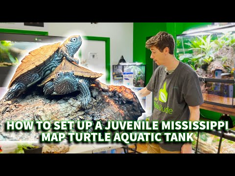 How to set up a juvenile Mississippi Map turtle BioActive aquatic tank