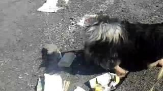 Приют для бездомных животных в Липецке. Часть 1