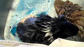 Lettie and Lilah Get a Bath! Thumbnail
