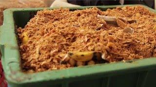 Por que Precisamos Parar de Produzir Lixo | Cristal Werlang Muniz | TEDxBlumenau