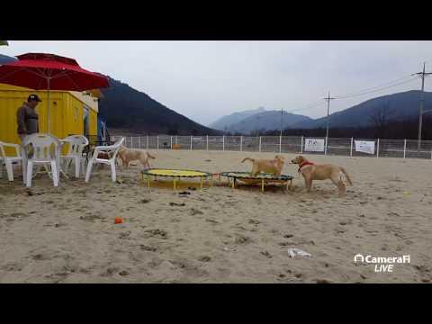 [KOREA DOG TV LIVE] 애견리조트 설악펍하우스 이야기 #멍빠 #속초애견호텔