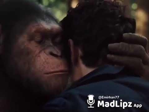 download KonuÅŸan maymun