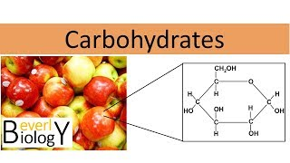 Carbohydrates (honors biology)