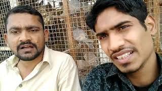 Download Karachi King Ustad Salam Younis Ki Chaht Ki Utadon Ki
