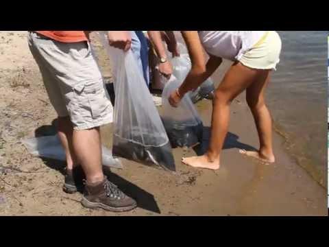 Sackett Lake Fish Release
