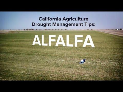 California Agriculture Drought Management Tips: Alfalfa