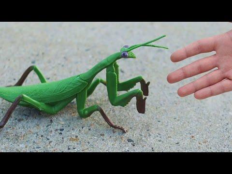 Gigantic Praying Mantis Youtube
