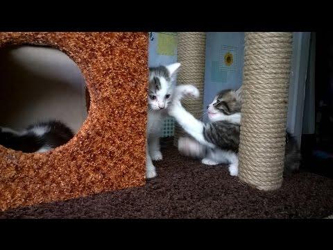 Домик с когтеточкой для вашего котика . Как сделать самому .
