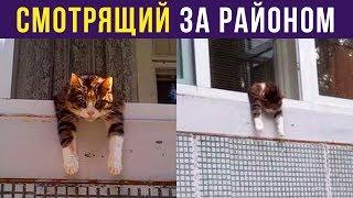Приколы. Кот смотрит за районом | Мемозг #240
