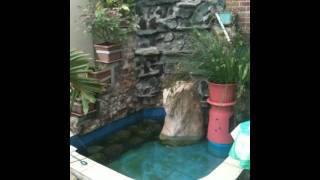 Dad's Fountain/koi Pond