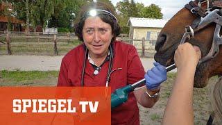 Frau Doktor und das liebe Vieh: Die Tierflüsterin von Ostfriesland
