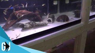 #263: 6 Tips To Prevent Heat Loss In Aquarium Or Fishroom - Tank Tip