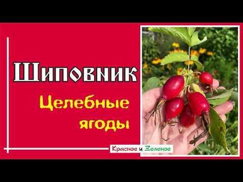Вопрос: Какие листья у дуба и шиповника?