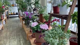 초여름 더위속에서도 잘크고 있는 베란다 식물들