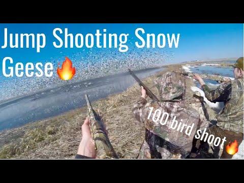 South Dakota Spring Conservation Snow Goose Hunting 2020