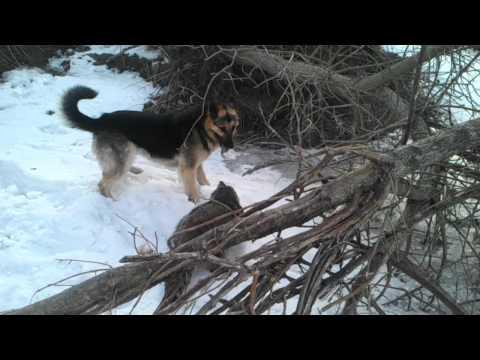 Dog vs raccoon