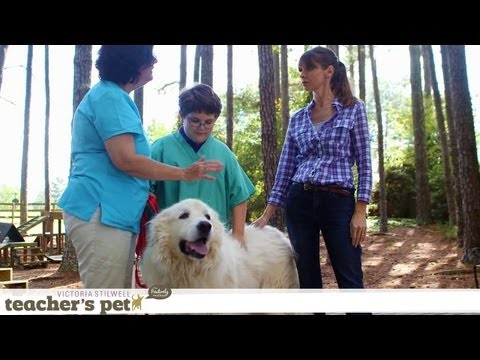 Results of Positive Training   Teacher's Pet With Victoria Stilwell