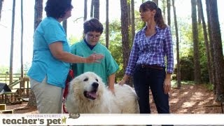 Results of Positive Training | Teacher's Pet With Victoria Stilwell