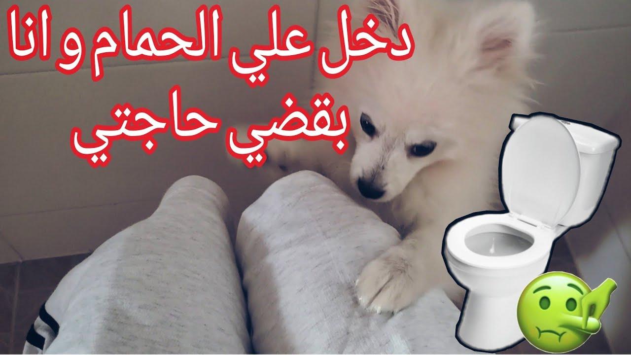 Look how my dog Hobi talk me / تعالو شوفو كيف هوبي يتكلم معايا بلغتو هههههه / دخل علي للحمام