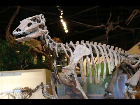 #36 Dinosaur Leg Work: Reconstructing Thescelosaurus
