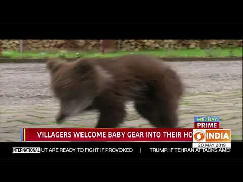 Baby bear in Bosnia finds way to a village, gets adopted | DD India