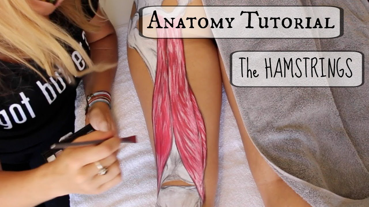 Anatomy Tutorial: The HAMSTRINGS!! - YouTube
