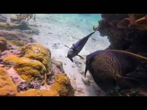 Carib Marine Contracting & Research Inc. Coral Harbour 2015