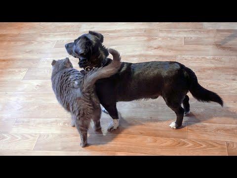 Будете улыбаться до конца ролика ) Дружба кота и собаки в приюте для животных Дари добро Нск