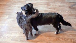 Такое не часто увидишь Дружба кота и собаки в приюте для животных Дари добро Нск Мило До слез