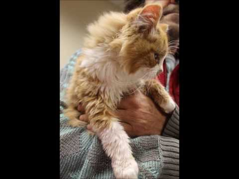 A heartbreaking story about two abandoned cats found in the woods.