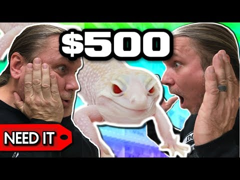 $20 LEOPARD GECKO vs $500 LEOPARD GECKO!!  BRIAN BARCZYK