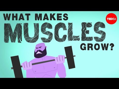 What makes muscles grow? Jeffrey Siegel