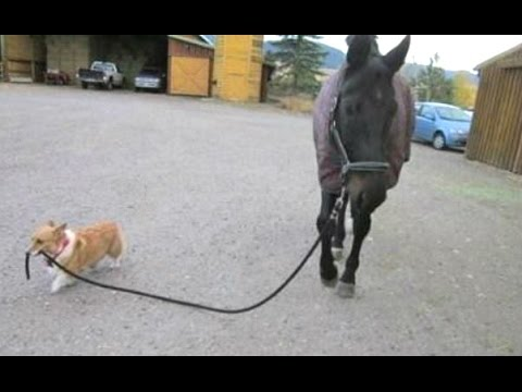 Horse farts foal jumps funny animals rolling - YouTube |Youtube Pets Funny Horses