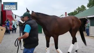 Kentucky Derby Winner Nyquist Leaves for Pimlico - Interview with Jack Sisterson