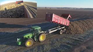 Sugar beet harvest 2K16/ arrachage de betterave 2K16