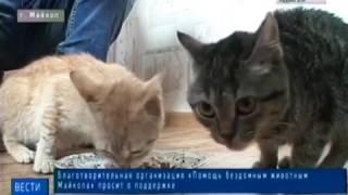 Благотворительная организация «Помощь бездомным животным Майкопа» просит о помощи