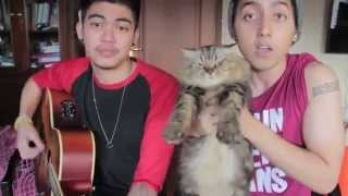Selena Gomez - Come & Get It (Cover with a dancing cat!!)
