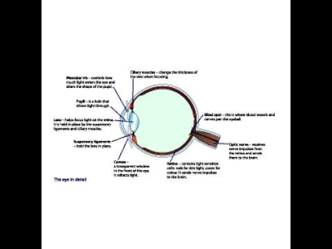 Gcse biology the eye youtube ccuart Image collections