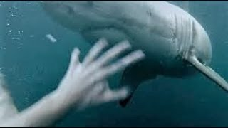 The Scariest Things Caught by GoPro Cameras