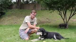 How Do I Teach My Dog To Heel?