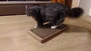 Кот перестал драть мебель.