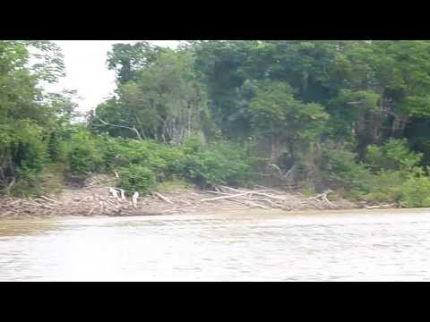Traveling Abujao river basin, Ucayali - Peru (2013)