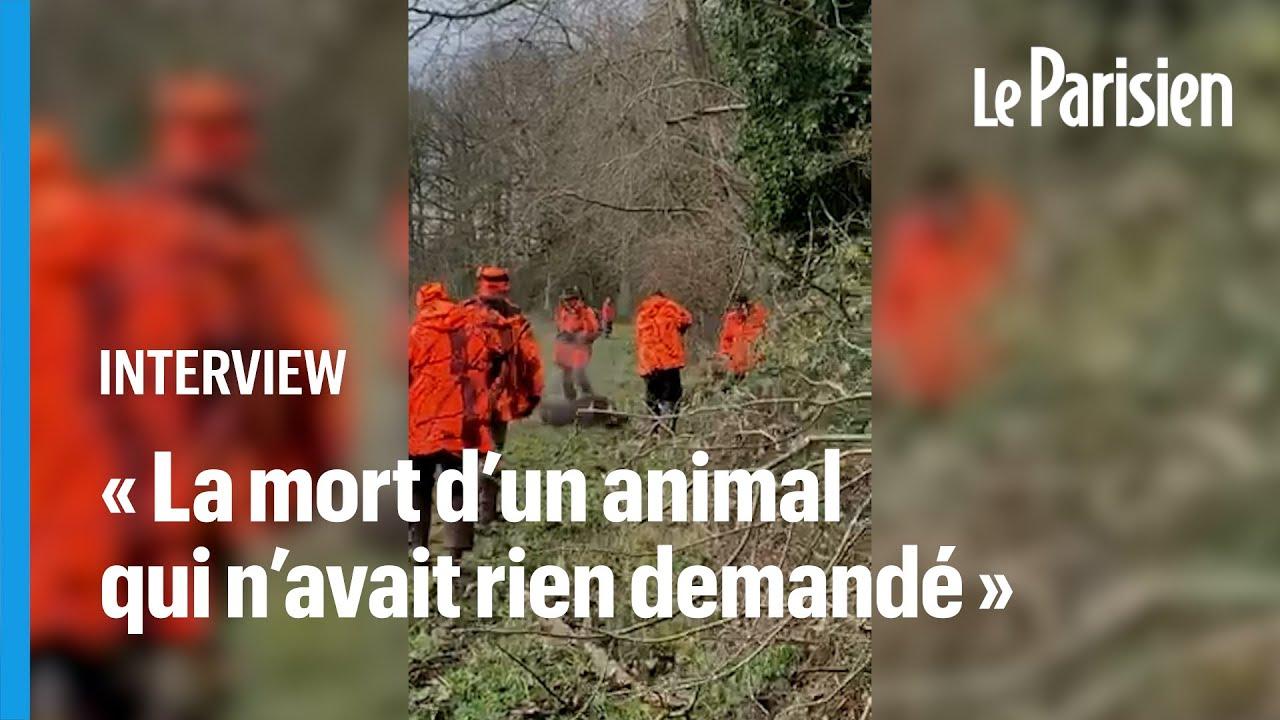 Sanglier domestiqué abattu par un chasseur : un an après, Alain en a encore les larmes aux yeux
