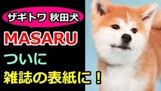 【ザギトワ】秋田犬のマサル(MASARU)が雑誌「週刊朝日」に登場!犬が...