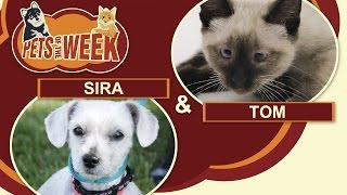 Pets of the Week #11 Sira & Tom