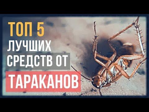 ТОП 5 лучших средств от тараканов: итоги испытаний в 2018 году
