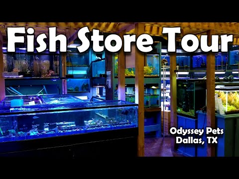 AMAZING Fish Store And Tour In Dallas Texas That Sells SHRIMP